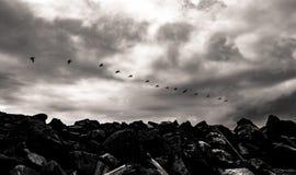 Oiseaux noirs et blancs volant au-dessus d'une jetée contre un ciel nuageux Photo stock