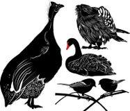 Oiseaux Numiba de pintade La figure montre un cygne d'oiseau silhouettes de faucon sur le fond blanc Une mésange d'isolement sur  Photos libres de droits