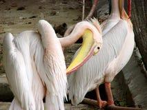 Oiseaux ou barres Photo stock