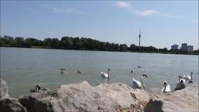 Oiseaux par l'eau banque de vidéos