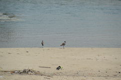 Oiseaux par la mer Photographie stock libre de droits