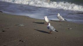 Oiseaux par la mer La Mer Noire banque de vidéos