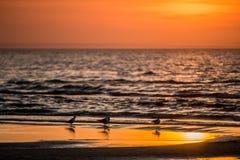 Oiseaux pendant le coucher du soleil orange près de l'océan photographie stock libre de droits