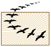 oiseaux pilotant le logo Photo stock