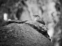 Oiseaux, populairement connus sous le nom d'oiseaux ou oiseaux Photo stock