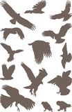 Oiseaux prédateurs Illustration Libre de Droits