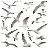 Oiseaux réglés d'isolement Photographie stock