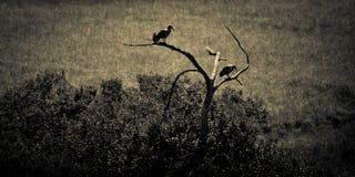 Oiseaux regardant à l'extérieur Image libre de droits