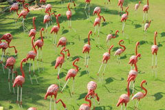 Oiseaux ROUGES avec leurs ombres (héron) Images libres de droits
