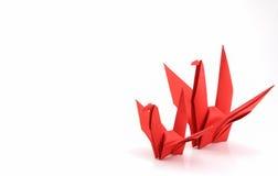 Oiseaux rouges de peper Photographie stock libre de droits