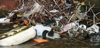 Oiseaux s'adaptant à la pollution Image libre de droits