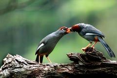 Oiseaux s'alimentant photographie stock