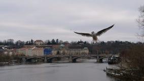 Oiseaux sauvages gratuits volant sur le ciel Photographie stock libre de droits
