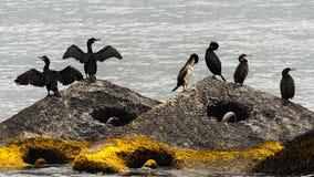 Oiseaux sauvages sur le bord de la mer Photos stock