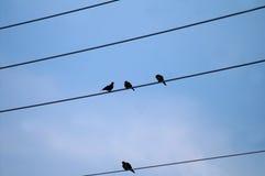Oiseaux se reposant sur des lignes à haute tension Image libre de droits