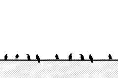 Oiseaux se reposant sur la barrière de maillon de chaîne Photographie stock libre de droits