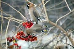 Oiseaux se reposant sur la cendre Image libre de droits