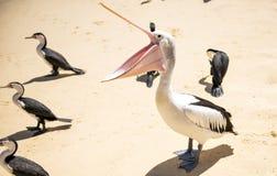 Oiseaux se reposant sur la plage Image libre de droits