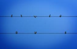 Oiseaux se reposant sur le fil Photographie stock libre de droits