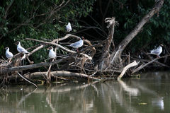 Oiseaux se reposant sur peu de branches Images stock