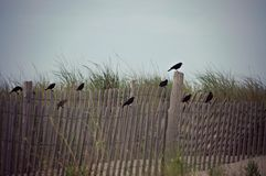 Oiseaux se reposant sur un courrier de frontière de sécurité à la plage Image stock