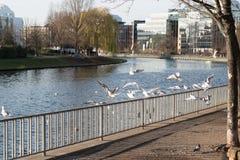 Oiseaux se reposant sur une barrière et volant par la rivière Photographie stock