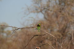 Oiseaux sud-africains photos stock