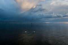 2 oiseaux sur Bodensee Photo stock