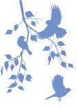 Oiseaux sur des branches Image stock