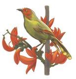 Oiseaux sur des branches Photo libre de droits