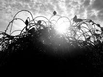 Oiseaux sur des buissons photo libre de droits