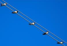 Oiseaux sur des fils Photos stock