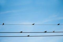 Oiseaux sur des fils Images stock