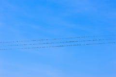 Oiseaux sur des fils de l'électricité Photographie stock libre de droits