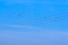 Oiseaux sur des fils de l'électricité Photo libre de droits
