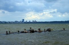 Oiseaux sur des pierres en mer Image stock