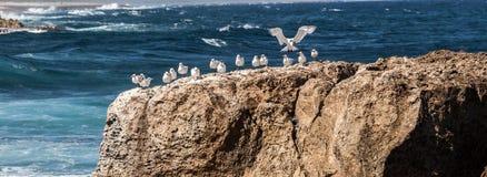 Oiseaux sur des roches Image stock