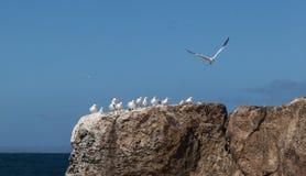 Oiseaux sur des roches Photos stock
