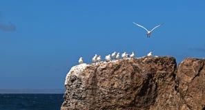 Oiseaux sur des roches Photographie stock