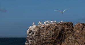 Oiseaux sur des roches Images libres de droits