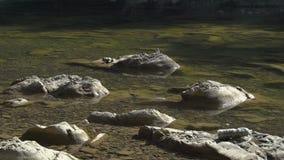 Oiseaux sur des roches banque de vidéos