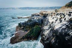 Oiseaux sur des roches le long de l'océan pacifique, à La Jolla, la Californie Image stock