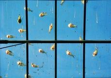 Oiseaux sur des verres Photos libres de droits