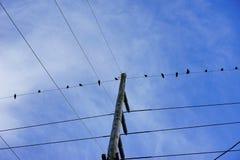 Oiseaux sur l'électro tour de fil Photo libre de droits
