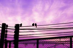 Oiseaux sur l'amour en baisse de fond de câble et de ciel et de nuages Image libre de droits