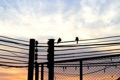 Oiseaux sur l'amour en baisse de fond de câble et de ciel et de nuages Image stock