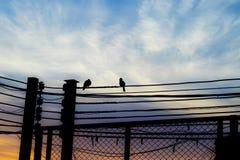 Oiseaux sur l'amour en baisse de fond de câble et de ciel et de nuages Photos stock