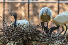 Oiseaux sur l'arbre Photographie stock libre de droits