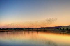 Oiseaux sur l'eau au coucher du soleil image stock