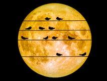 Oiseaux sur la ligne électrique pleine lune superbe de puissance Image libre de droits